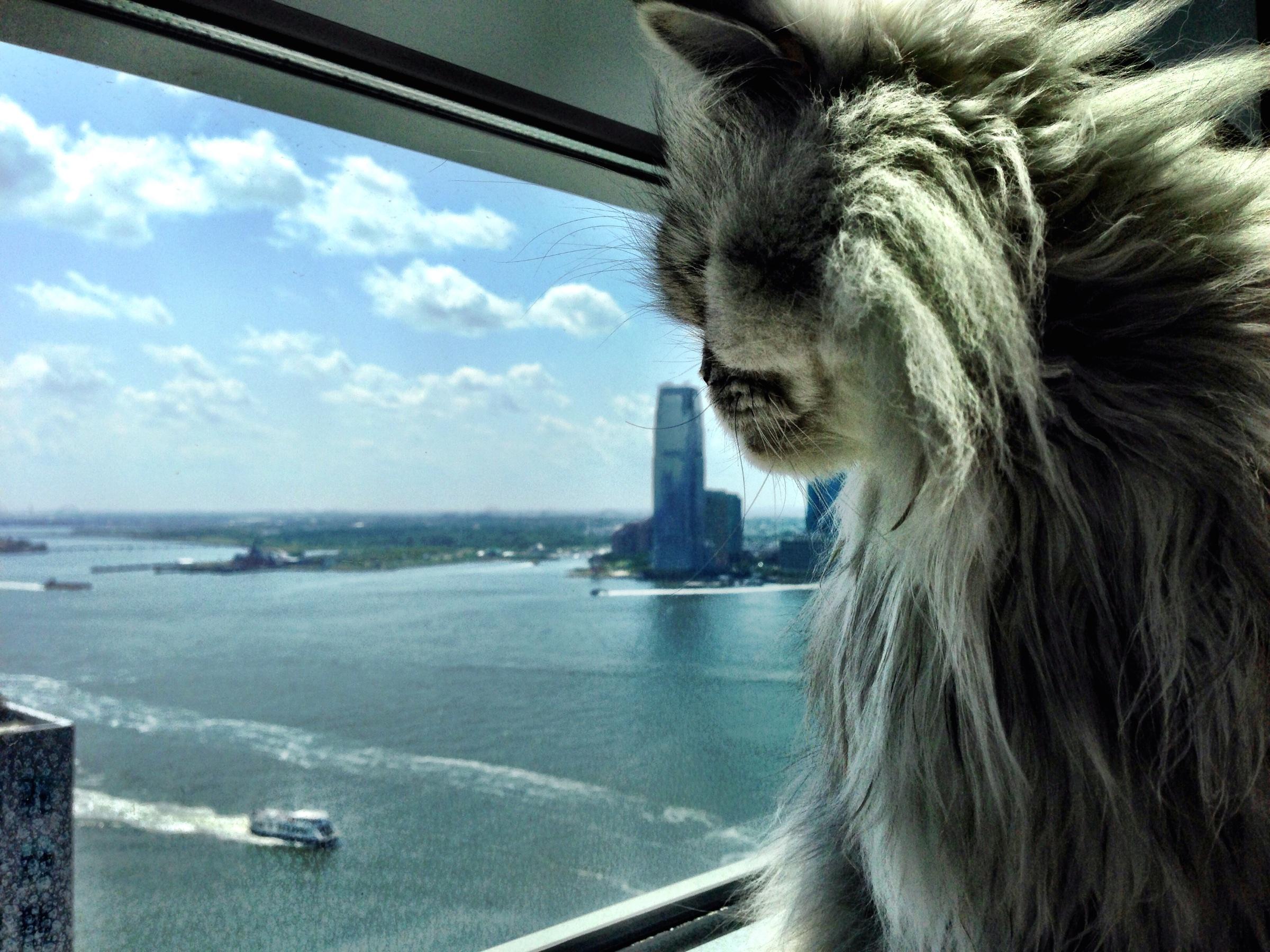 Unsere Katze Sheila beim Geniessen der Aussicht